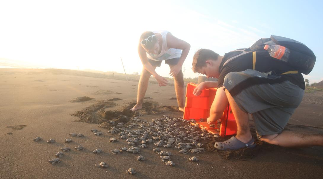 Volunteers releasing turtle hatchlings at our turtle volunteer programmes overseas